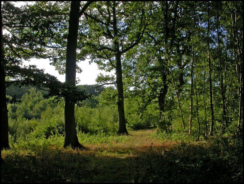 forestiere.jpg
