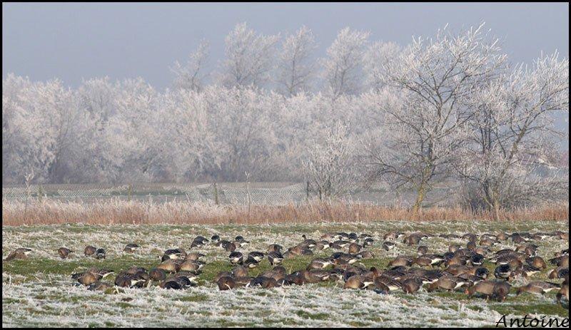 hiver2007.jpg